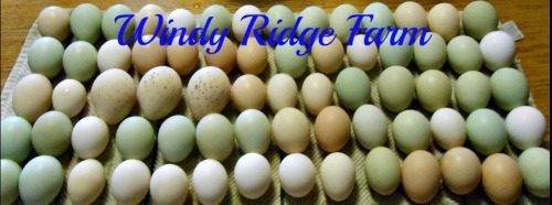 Ribbet collage eggs cover