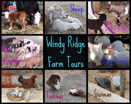 Ribbet collage farm tour
