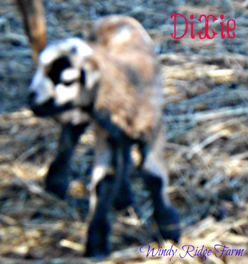 2016 Animals 032 Dixie