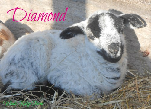 2016 Animals 037 Diamond