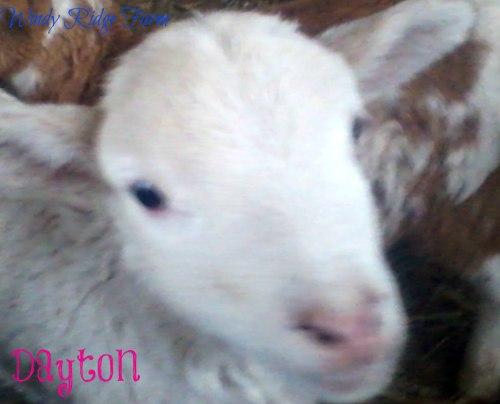 Picture0415161231_2Dayton