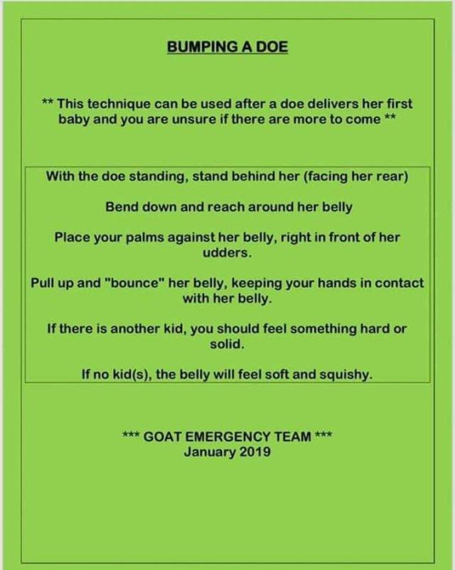 Goat Care – Windy Ridge Farm